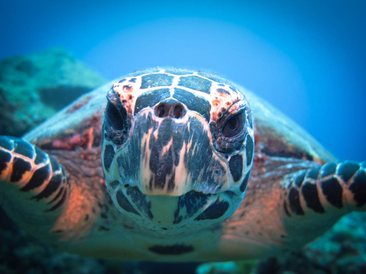 Turtley cool