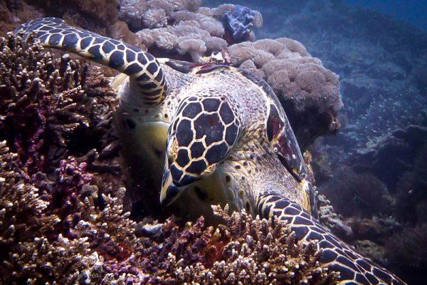 Turtley delicious