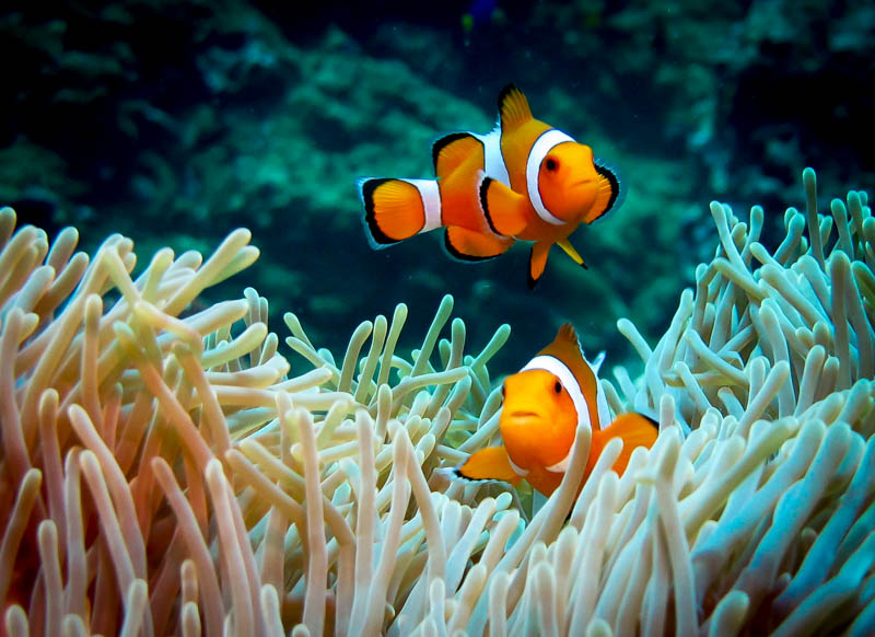 We found Nemo!