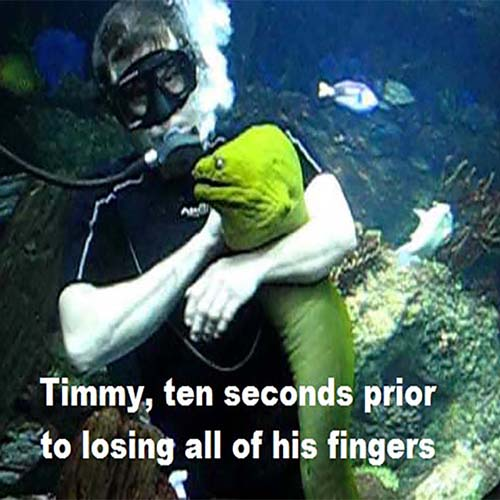 Diver holding a moray eel