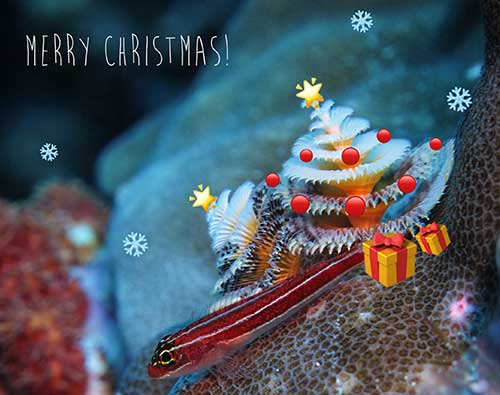 Decorated Christmas Tree Worm