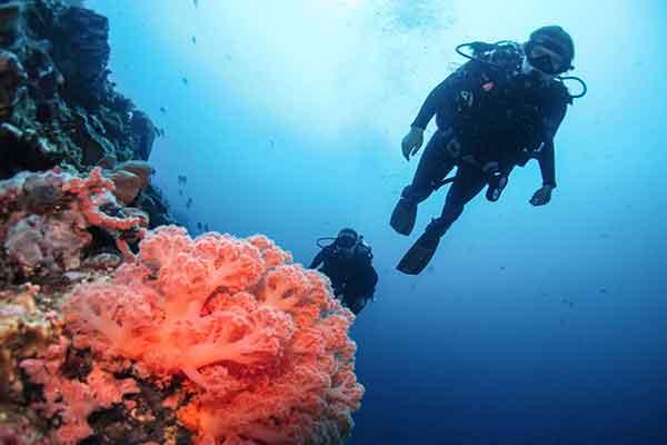 diver drifts past soft corel