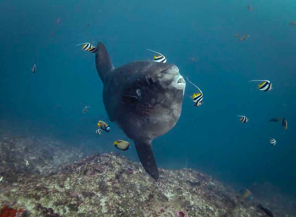 A Mola Alexandrini